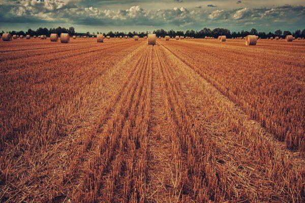 megdöbbentő termőföld értékelés
